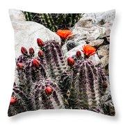 Trichocereus Cactus Flowers Throw Pillow