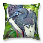 Tricolor Heron Adults In Breeding Throw Pillow