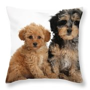 Tricolor Merle Daxie-doodle And Red Toy Throw Pillow