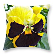 Tricolor Pansy Throw Pillow