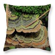 Tricolor Turkeytail Throw Pillow