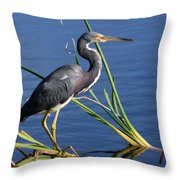 Tricolored Heron At The Pond Throw Pillow