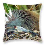 Tricolored Heron Incubating Eggs Throw Pillow