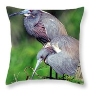 Tricolored Heron Male And Female At Nest Throw Pillow