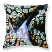 Tridacna Clams 13 Throw Pillow