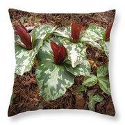 Trillium Cuneatum Throw Pillow