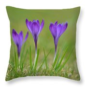 Trio In Violet Throw Pillow