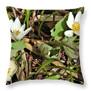 Trio Of Bloodroot Flowers Throw Pillow