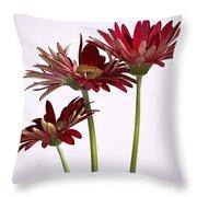Trio Of Red Gerbera Daisys Throw Pillow
