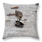 Trio Of Shore Birds Throw Pillow