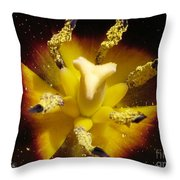 Triumph Tulip Named Gavota Throw Pillow