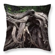 Troots Of A Fallen Tree By Wawa Ontario Throw Pillow