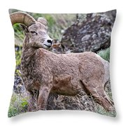 Wild Bighorn Throw Pillow
