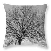 Tropic Winter Throw Pillow