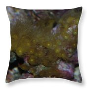 Tropica Fish Throw Pillow