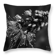 Tropical Flower Caesalpinia Pulcherrima Throw Pillow