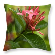 Tropical Flowers In Singapore Throw Pillow