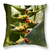 Tropical Fountain Of Seeds Throw Pillow