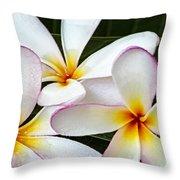 Tropical Maui Plumeria Throw Pillow