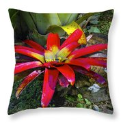 Tropical Plant Colors Throw Pillow