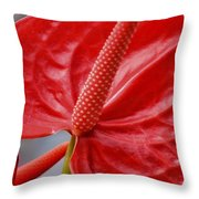 Tropical Red Anthurium Throw Pillow