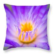 Tropical Waterlily Glow Throw Pillow