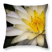 Tropical White Water Lily Throw Pillow