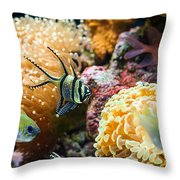 Tropical Wonderland - Banggai Cardinalfish Throw Pillow