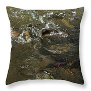 Trout Feeding Surface Rainbow Trout Art Prints Throw Pillow