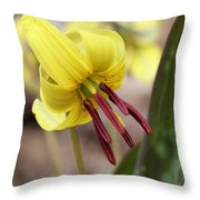 Trout Lily Or Dog-toothed Violet Throw Pillow