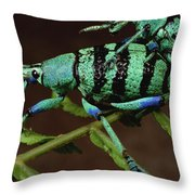 True Weevil Couple Mating Papua New Throw Pillow