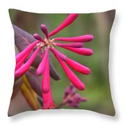 Trumpet Honeysuckle Buds Of Coral Woodbine  Throw Pillow