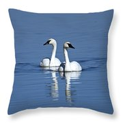Trumpeter Swan Couple Throw Pillow