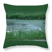 Trumpeter Swan Family Throw Pillow