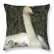 Trumpeter Swan On Nest With Chicks Throw Pillow