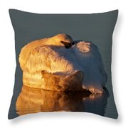 Trumpeter Swan On Swan Lake Throw Pillow