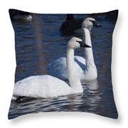 Trumpeter Swan Pair Throw Pillow