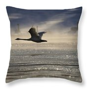 Trumpeter Swan Silhouetted In Flight Throw Pillow