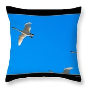 Trumpeter Swans In Color Throw Pillow