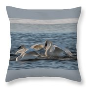 Trumpeter Swans Playing Tag Throw Pillow