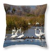 Trunda Swans  Mixed Ducks Throw Pillow