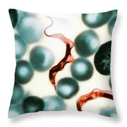 Trypanosoma Lewisis Throw Pillow by Science Source