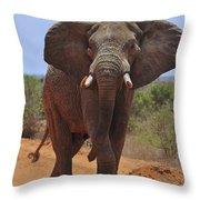 Tsavo Elephant Throw Pillow