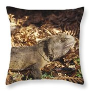 Tuatara 70 Year Old Male New Zealand Throw Pillow