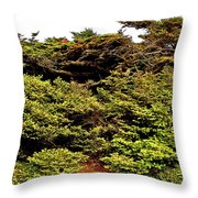 Tuckamore At Green Point Coastal In Gros Morne Np-nl Throw Pillow