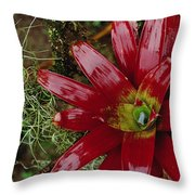 Tufted Airplant And Spanish Moss Throw Pillow