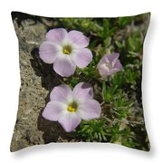 Tufted Phlox Throw Pillow