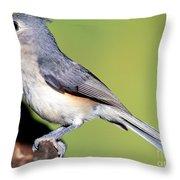 Tufted Titmouse Parus Bicolor Throw Pillow