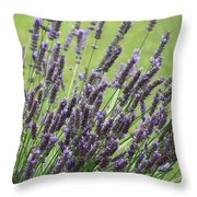 Tuilieres Lavender Throw Pillow