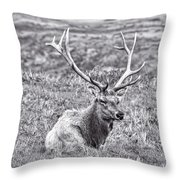 Tule Elk In Black And White  Throw Pillow